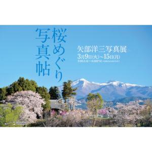 2021年3月9日(火)~3月15日(月) 桜めぐり 写真帳
